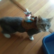 "A cat with a mouse attached to her back as a ""Clueless Cat"" costume."