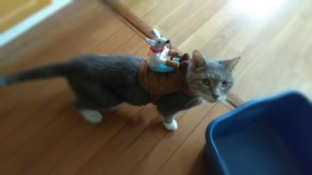 Clueless Cat in Her Halloween Costume - cat wearing a stuffed mouse on a back saddle type harness