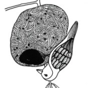 Yellow Finch on Nest Adult Coloring Page - finch hanging from bottom of nest