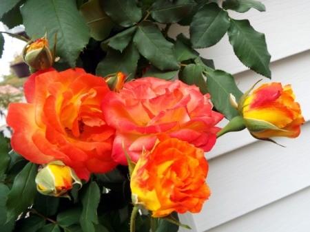 Enjoying The Offerings Of Autumn - Piñata rose, orange and yellow