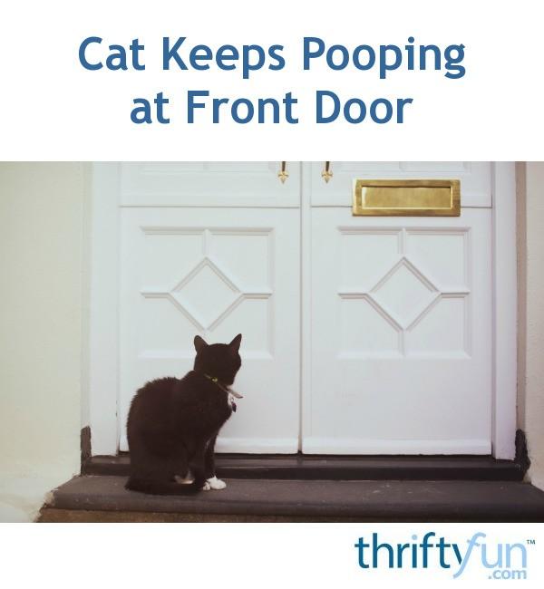 Cat Keeps Pooping At Front Door Thriftyfun