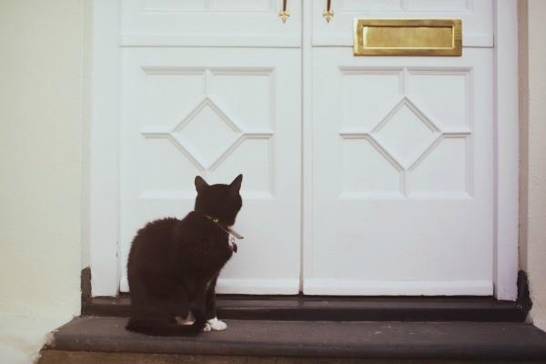 Cat At Front Door