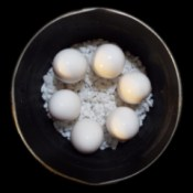 Eggs placed on rocks to keep them upright while boiling.