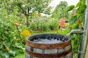Rain Barrel in Garden