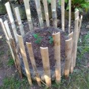 A garden plot made with an old tire and bamboo fencing.
