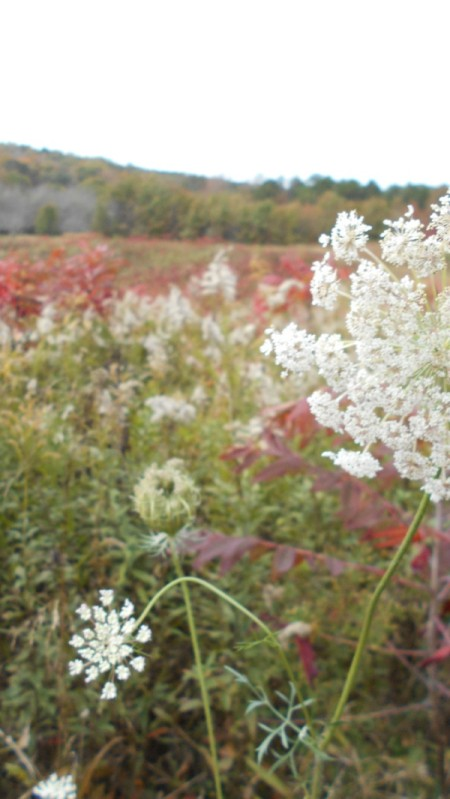 Fall Colorfest (Gibbs Garden, GA) - wildflowers.