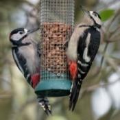 2 birds on a feeder.