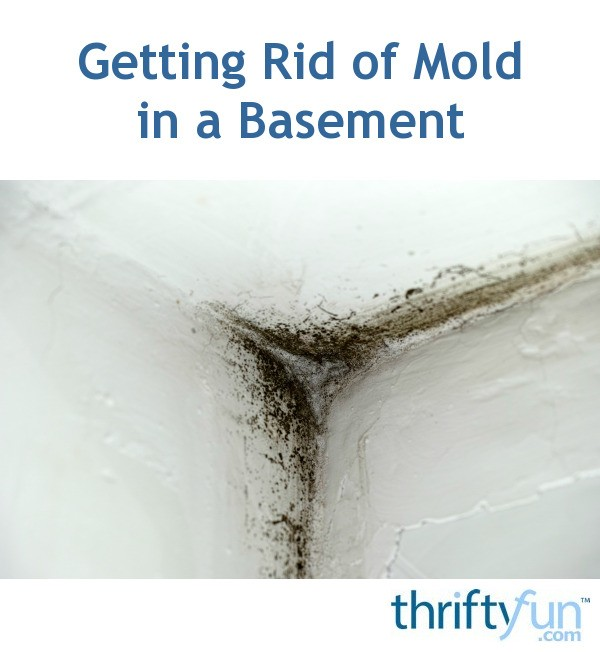 Getting Rid Of Mold In A Basement