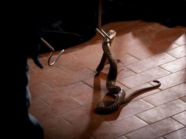Snake Being Captured