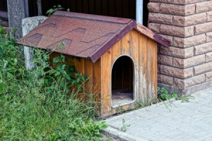 Outdoor Kennel
