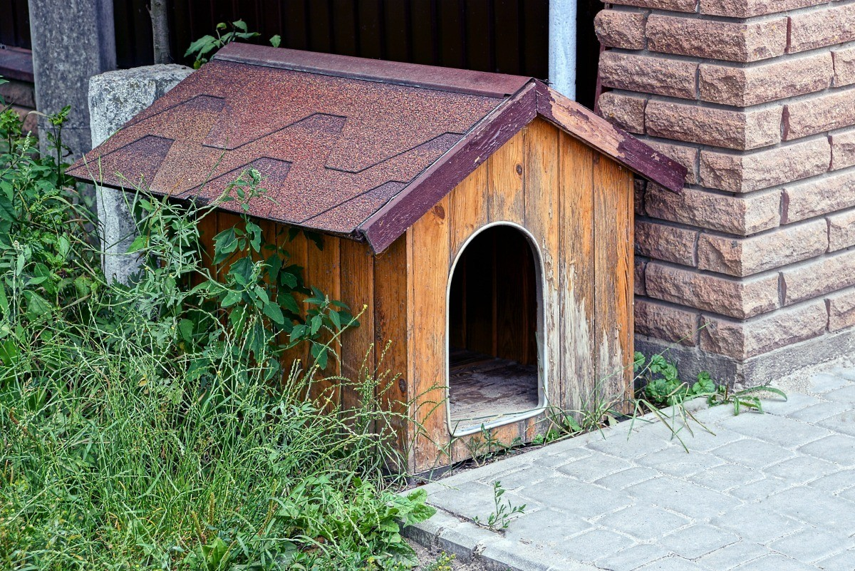 Getting Rid of Odors in an Outdoor Kennel | ThriftyFun