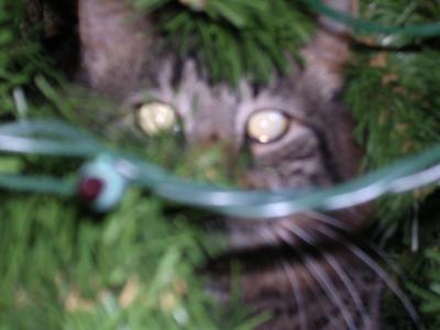 A cat inside a Christmas tree.