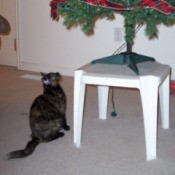 A cat looking up at a Christmas tree