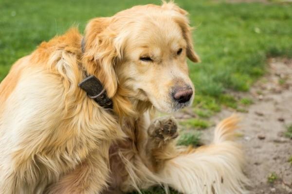 can you put flea medicine on a dog after a bath