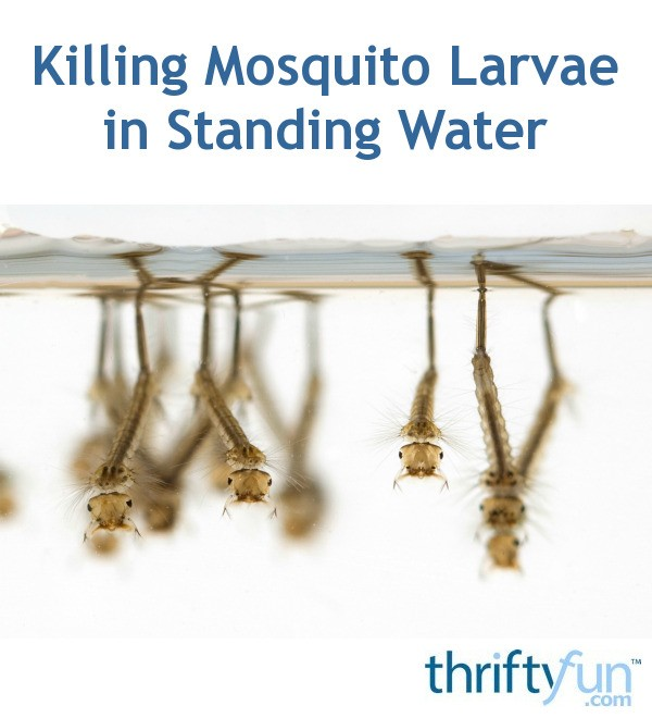 Killing Mosquito Larvae In Standing Water Thriftyfun
