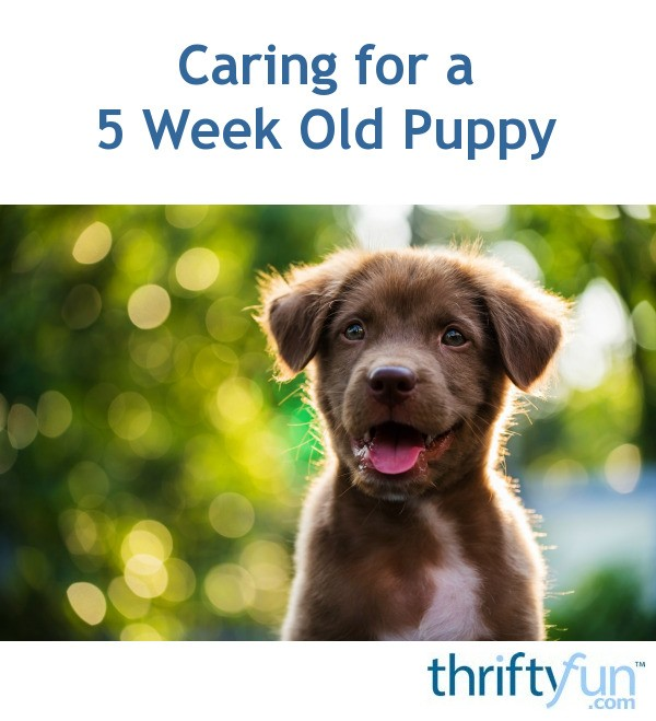 Caring for a 5 Week Old Puppy | ThriftyFun