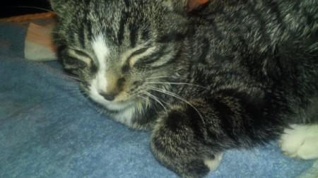 Keeping a Kitten from Scratching Its Wound - tiger stripe kitten