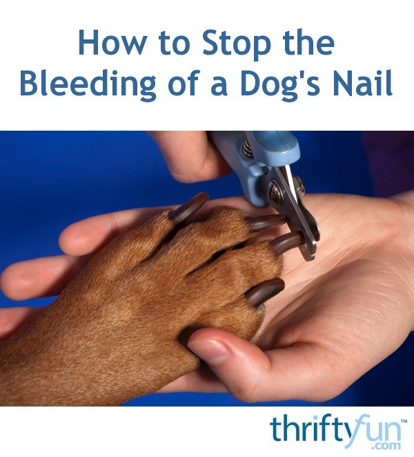 How to Stop the Bleeding of a Dog\'s Nail | ThriftyFun