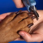 Dog Nails Being Trimmed