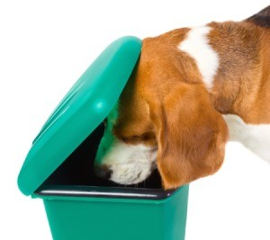 Dog Looking in Garbage Can