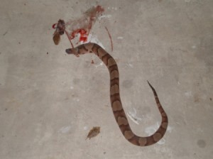 What Kind of Snake Was This?
