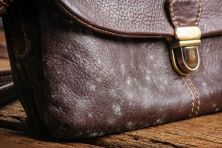 Removing Mold and Mildew from Leather