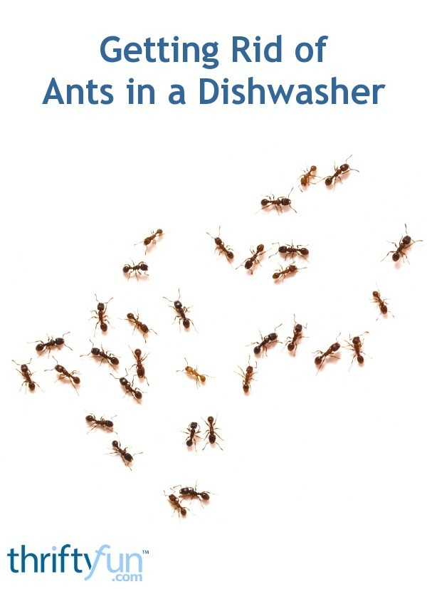Getting Rid of Ants in a Dishwasher | ThriftyFun