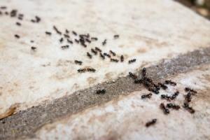 Tiny Ants