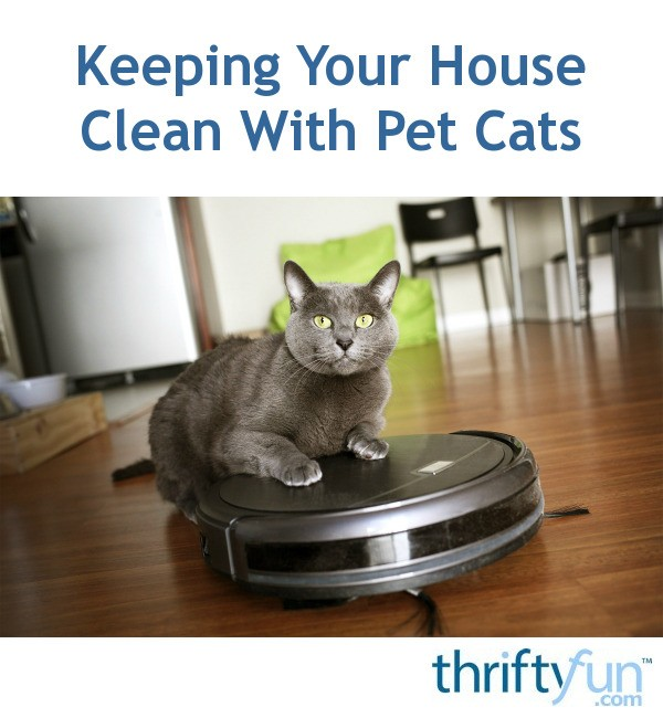 Keeping Your House Clean With Pet Cats Thriftyfun