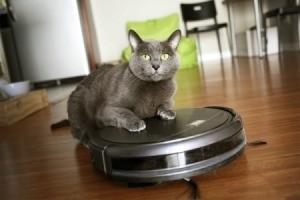 Cat with Roomba Vacuum