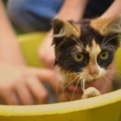 Kitten Getting Bathed