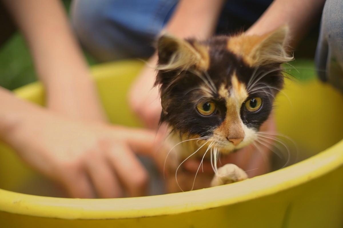 Bathing Cats In Dawn Dish Soap Thriftyfun