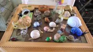 Displaying My Snail Collection - more snails