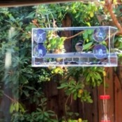 A chickadee in a clear bird feeder attached to a window.