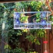 Clear Bird Feeder Visitors - chickadee in feeder