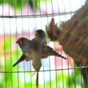 Finches Near Nest