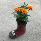 A child's rubber boot with marigolds planted inside.