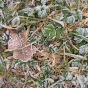 A frosty scene with fallen leaves.