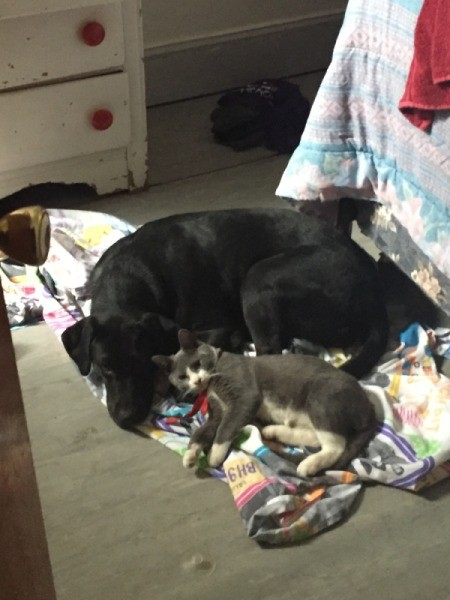 What Breed Is My Dog? - dog and cat lying together