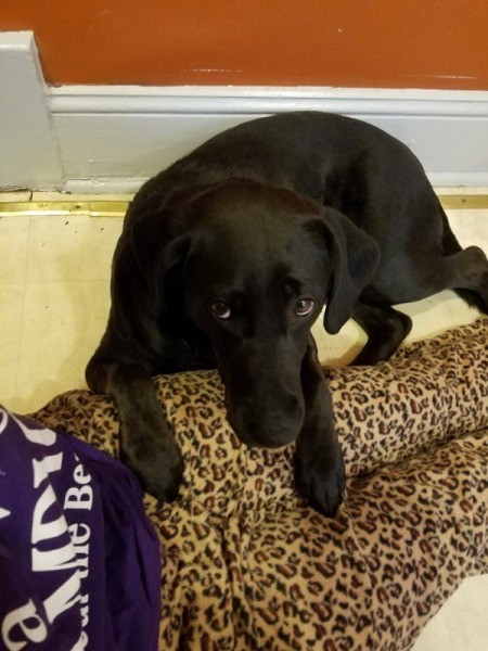 What Breed Is My Dog? - black dog lying on the floor