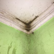 Some insects in the corner of a bathroom ceiling.
