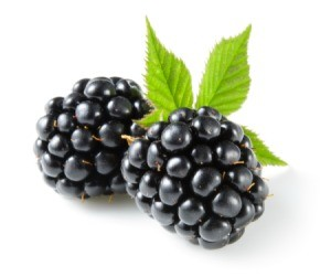 Two blackberries on white background