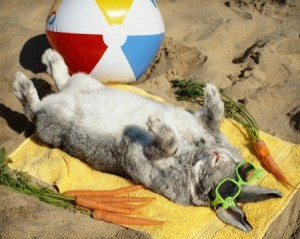 Rabbit wearing sunglasses sunbathing surrounded by carrots and a beach ball.