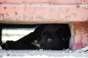 Black Dog Hiding under a cement structure.