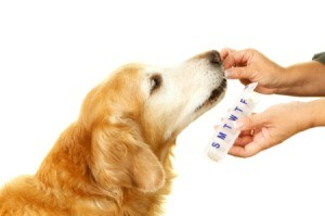 Dog taking medicine from a person holding a weekly pill container.