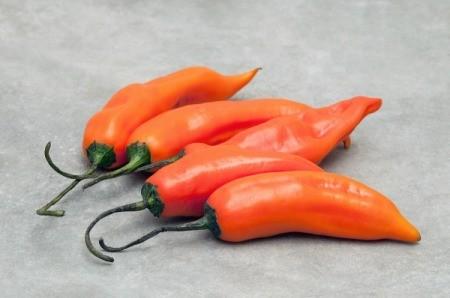 Orange Aji Amarillo peppers.