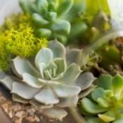 Succulents in a pot.