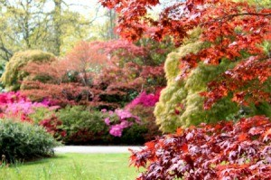 Autumn Garden full of color.