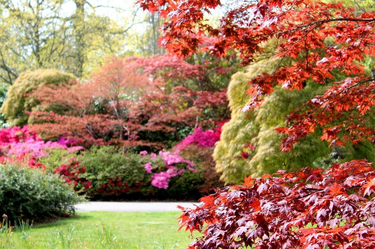 Autumn Garden Photos Thriftyfun