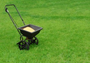 Lawn fertilizer in spreader on grass